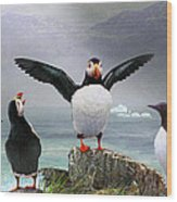 Puffin Pano Wood Print by R christopher Vest