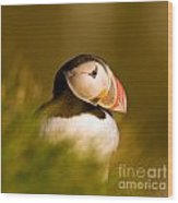 Puffin Portrait Wood Print