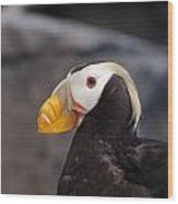 Puffin Tufted 1 Wood Print