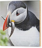 Puffin With Fish Wood Print