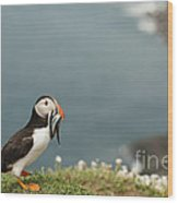 Puffin With Sandeels Wood Print