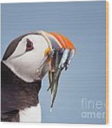 Puffin With Sandeels Portrait Wood Print