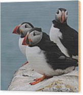 Puffins  Wood Print by Peter Skelton
