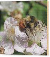 Puffy Bee Wood Print