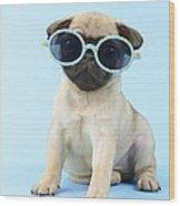 Pug Cool Wood Print by Greg Cuddiford