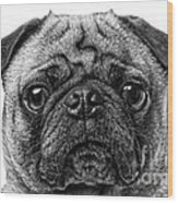 Pug Dog Black And White Wood Print