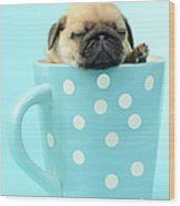 Pug In A Cup Wood Print
