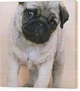 Pug Puppy Dog Wood Print