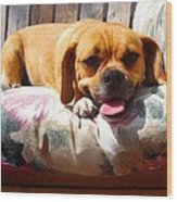 Puggle Lounging Wood Print