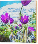 Pulsatilla Vulgaris Flowers Wood Print