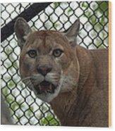 Puma Stare Wood Print