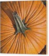 Pumpkin Aerial View Wood Print