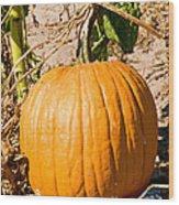 Pumpkin Growing In Pumpkin Field Wood Print
