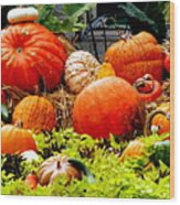 Pumpkin Harvest Wood Print by Karen Wiles