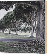 Punchbowl Cemetery - Hawaii Wood Print by Daniel Hagerman