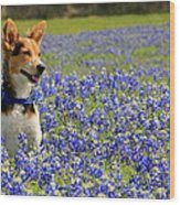 Pup In The Bluebonnets Wood Print