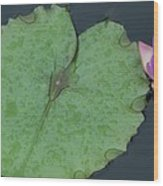 Puple Lily And Pad With Raindrops Wood Print