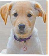 Pupp Wood Print
