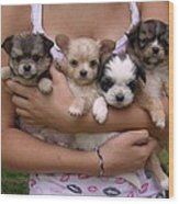 Puppies In Maria's Arms Wood Print