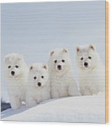Puppies In Snow Wood Print by Mitsuyoshi  Tatematsu