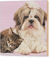 Puppy And Kitten Wood Print by Greg Cuddiford