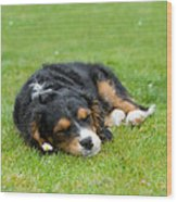 Puppy Asleep With Garden Daisy Wood Print