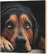 Puppy Dog Eyes Wood Print by Christina Rollo