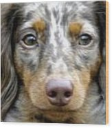 Puppy Dog Eyes Wood Print