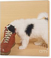 Puppy Dog With Head In Red Shoe Wood Print