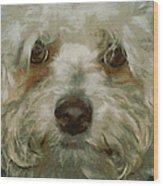 Puppy Eyes Wood Print