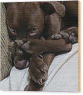 Puppy Feet Wood Print