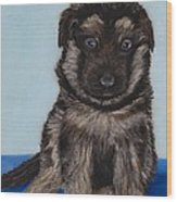 Puppy - German Shepherd Wood Print