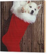 Puppy In Christmas Stocking Wood Print