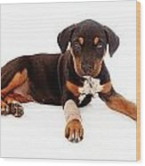 Puppy Laying With Injury Wood Print by Susan Schmitz