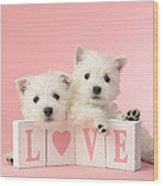 Puppy Love Wood Print by Greg Cuddiford
