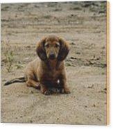 Puppy On The Beach Wood Print