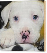 Puppy Pose With 4 Spots On Nose Wood Print