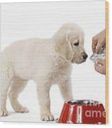 Puppy Receiving Medicine Wood Print