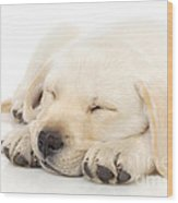 Puppy Sleeping On Paws Wood Print