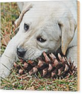 Puppy With Pine Cone Wood Print