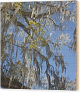 Pure Florida - Spanish Moss Wood Print by Christine Till
