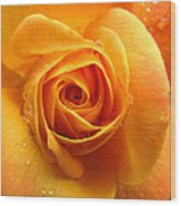 Pure Gold - Roses From The Garden Wood Print