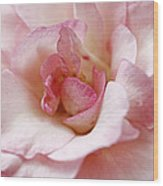 Pure Rose Wood Print