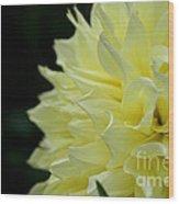 Purely Dahlia Wood Print
