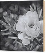 Purely Portulaca Wood Print
