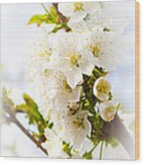 Purity In Nature Wood Print