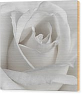 Purity Of A White Rose Flower Wood Print