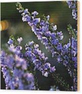 Purple 29987 Wood Print