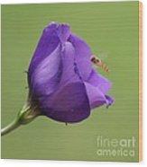 Purple 4 Wood Print