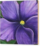 Purple African Violet Wood Print